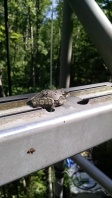 A frog decided it wanted to climb to the top too!